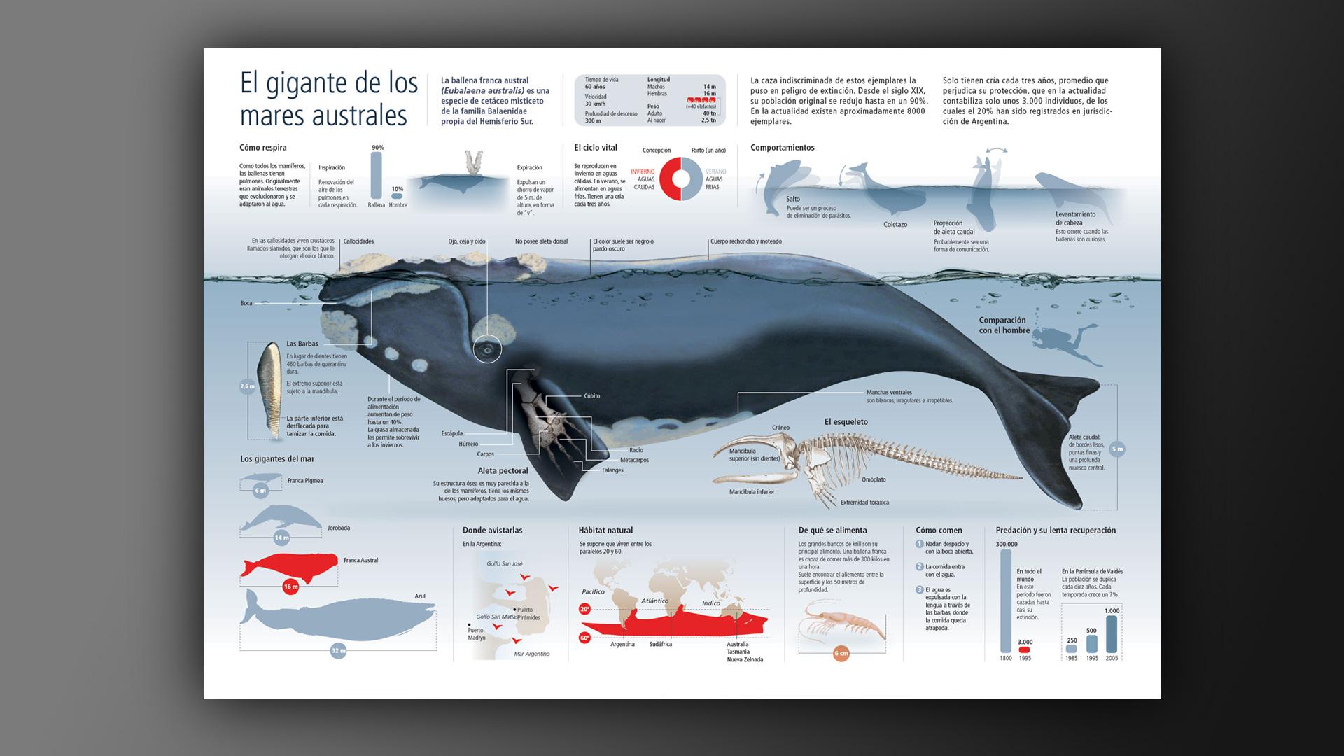 Encantador Diagrama De La Anatomía De La Ballena Fotos - Imágenes de ...